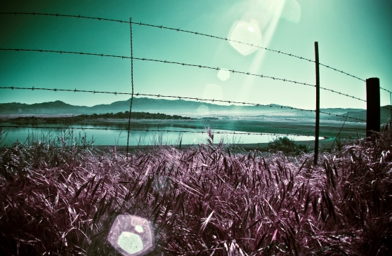 fading fences only