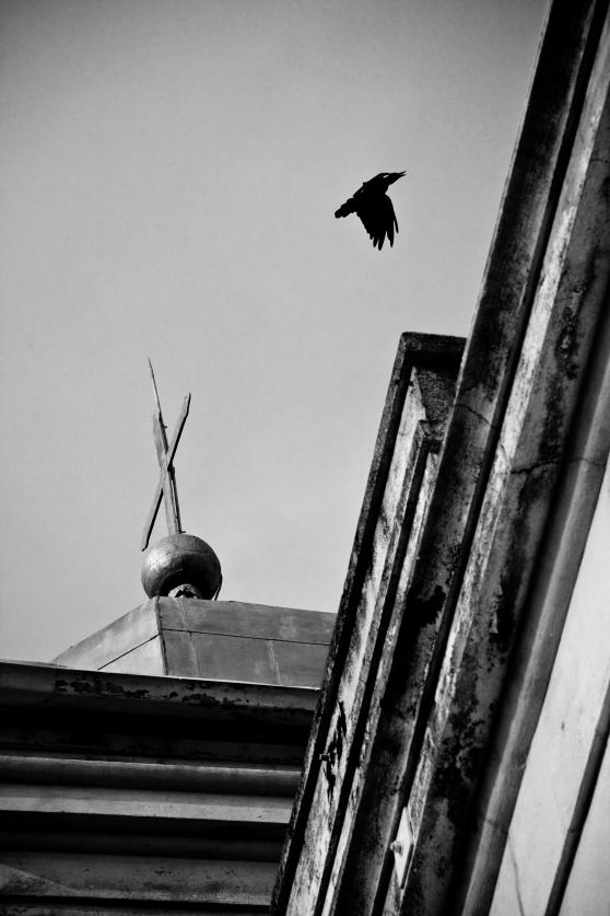 crow 2 bw