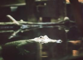 gator-sw